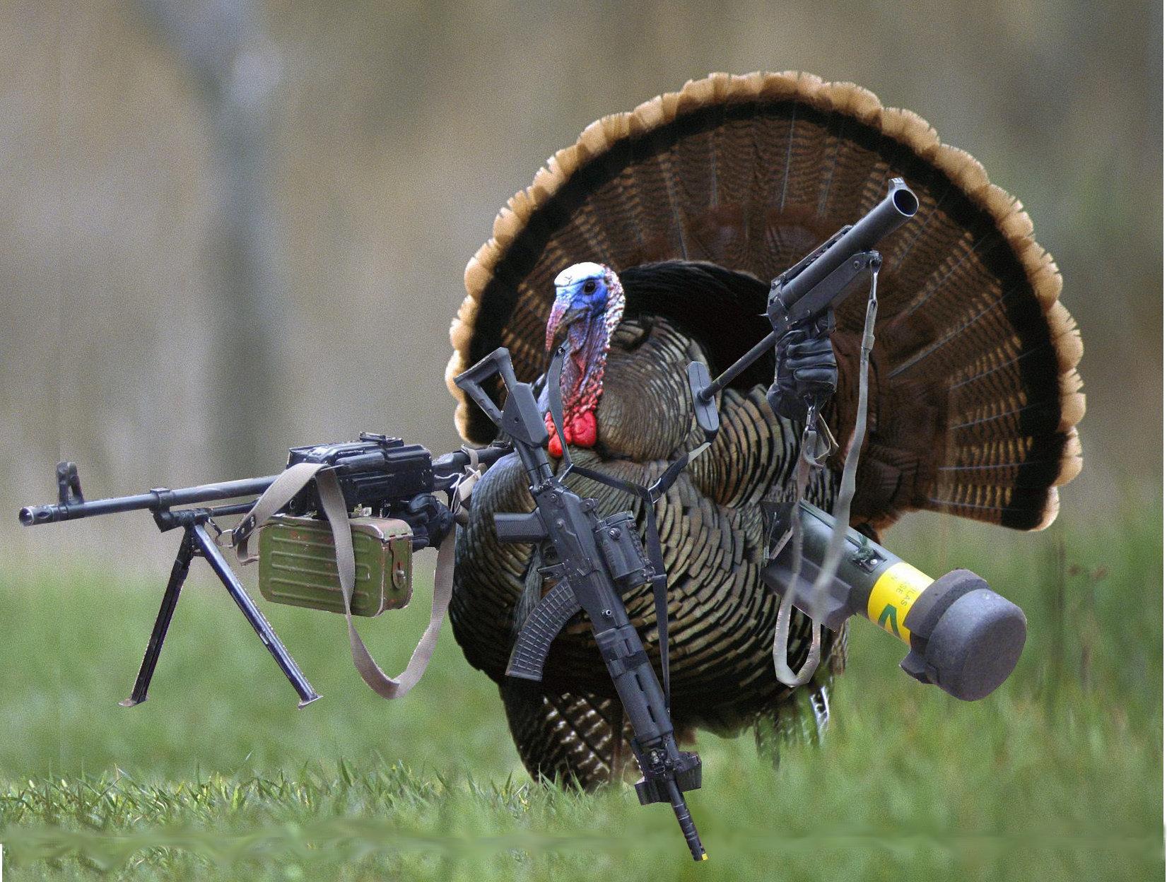 Web Site Traffic and a Turkey for SEO Joes DumpJoes Dump