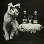 Cat Drunk