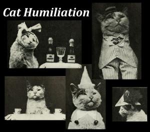 Cat Humiliation