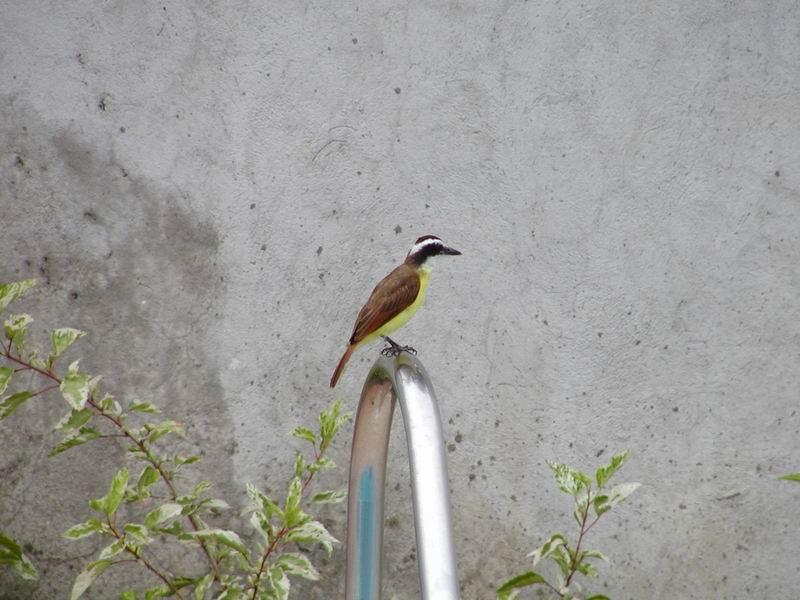 JoesDump Randomals: Bird