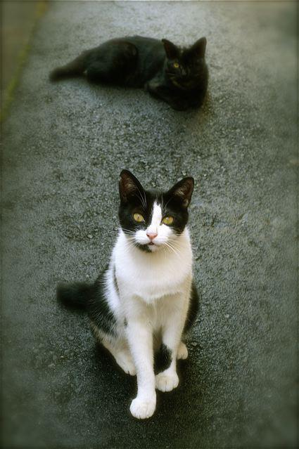 JoesDump Randomals: Cats