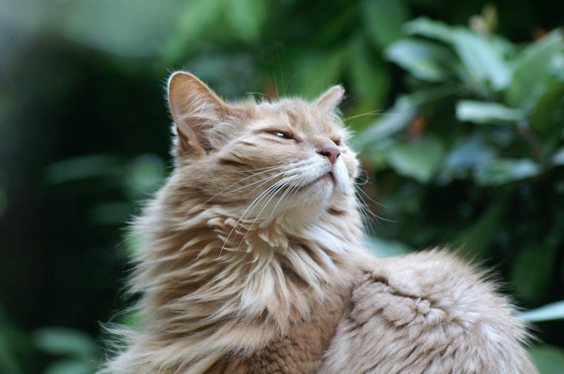 JoesDump Randomals: Cat
