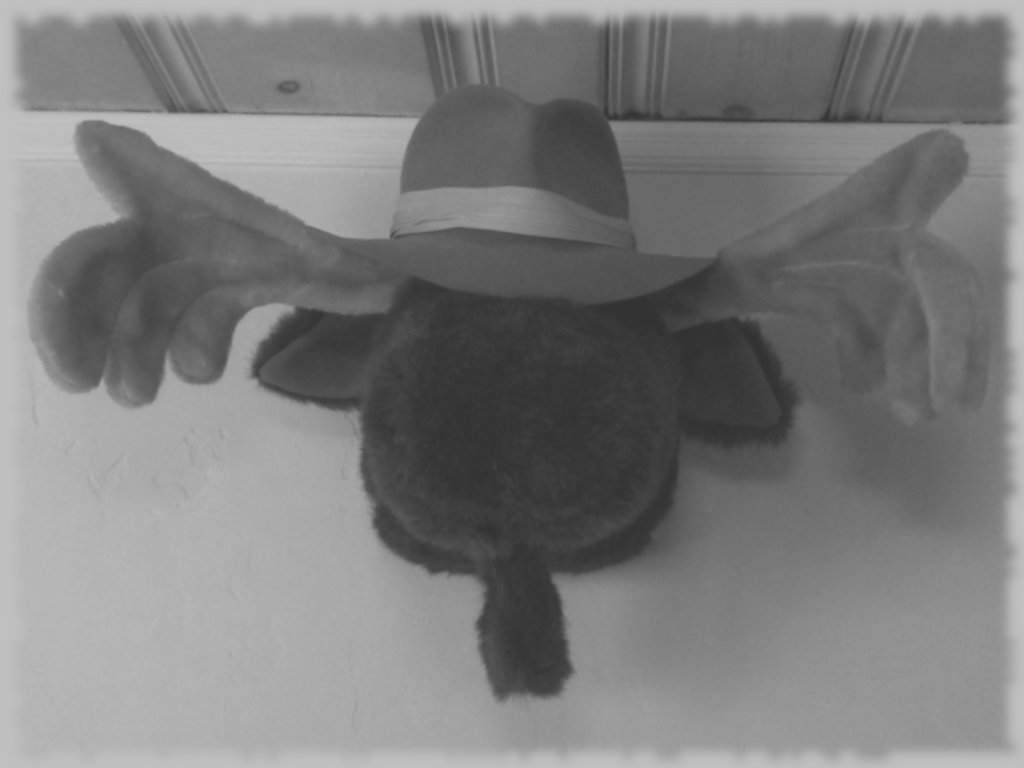 Moose Noir: Wall-Mounted Detective