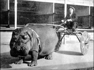HippoMan-web