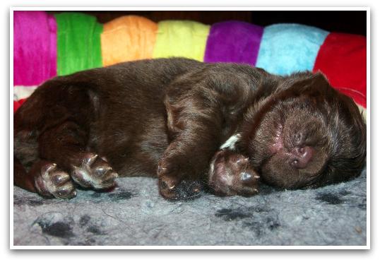 JoesDump Randomals: Puppy