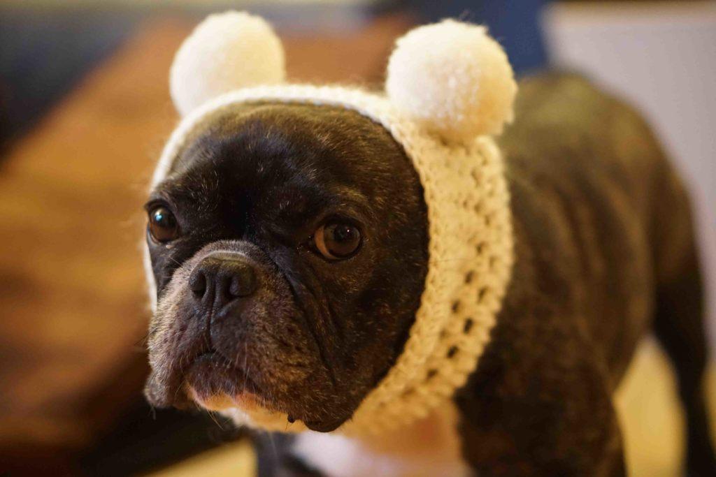 JoesDump Randomals: Pug