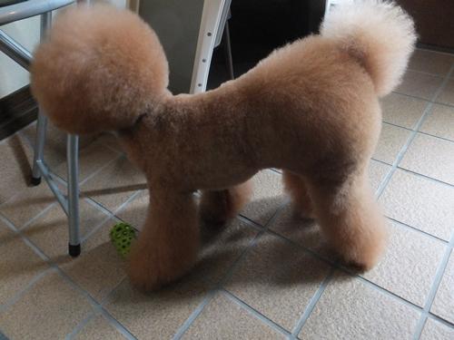 JoesDump Randomals: Dog?