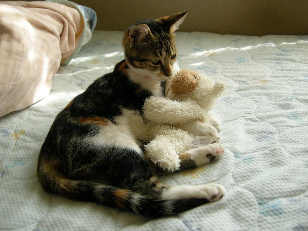 JoesDump Randomals: Kitten