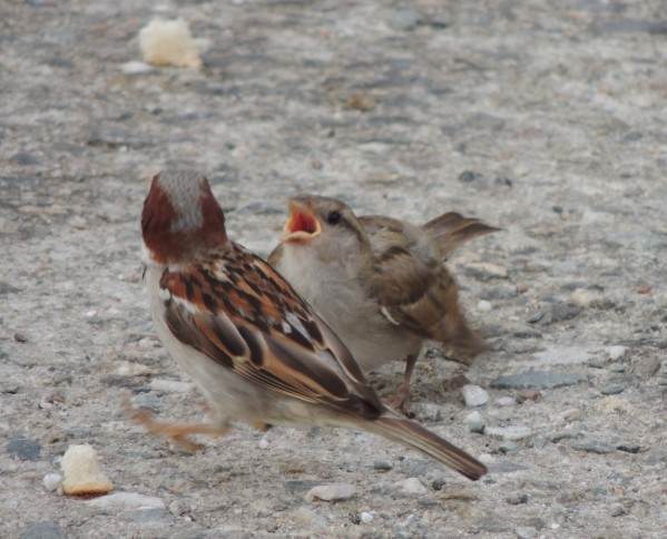JoesDump Randomals: Birds