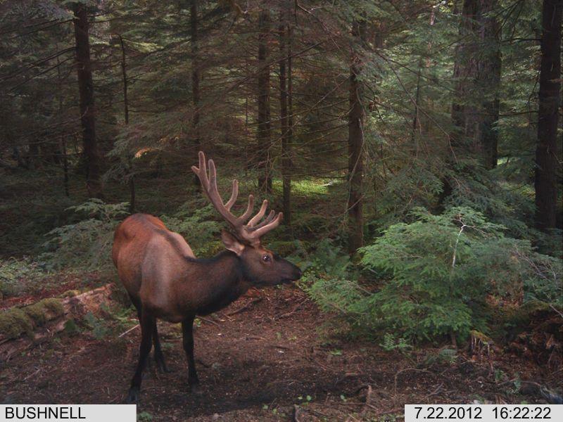 JoesDump Randomals: Elk