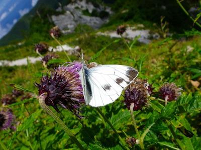 JoesDump Randomals: Butterfly