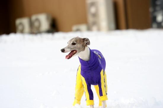 JoesDump Randomals: Ski Dog