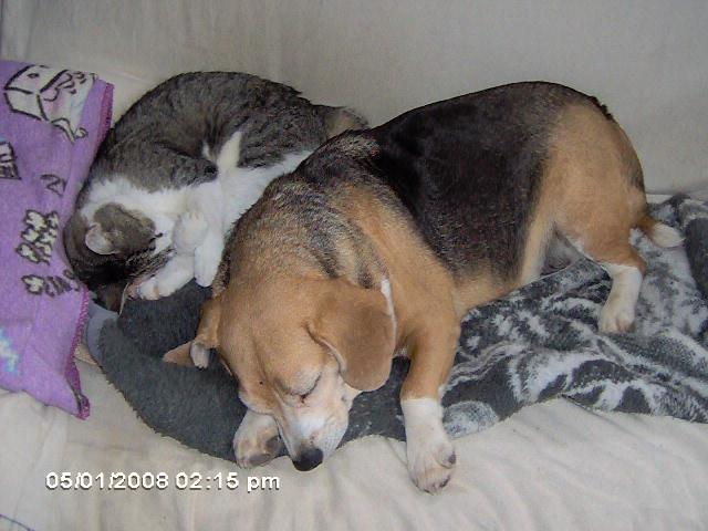 JoesDump Randomals: Cat Dog