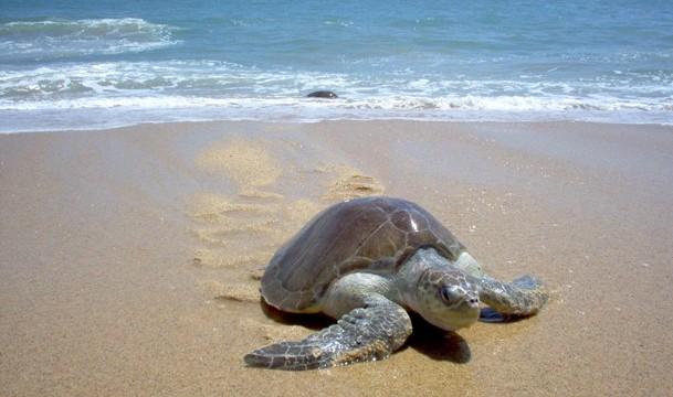 JoesDump Randomals: Sea Turtle