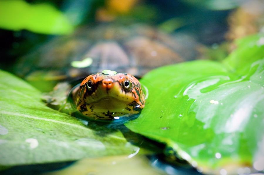 JoesDump Randomals: Turtle